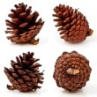 Pine cones on white background — Stock Photo