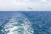 Waves astern a boat — Foto de Stock