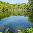 Small forest lake in summertime - Stock Photo