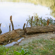 Wooden logs on the bank - Stock Photo