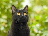 Zwarte kat op groen gebladerte achtergrond — Stockfoto