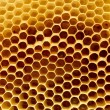 Fragment of honeycomb — Stock Photo