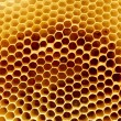 Royalty-Free Stock Photo: Honeycomb fragment
