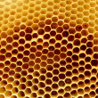 Honeycomb fragment — Stock Photo