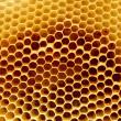 Honeycomb fragment — Stock Photo #13779071