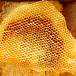Honeycomb pieces in bright sunlight - Stock Photo