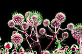 Brightly toned thistle flowers over black — Stock Photo