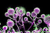 Toned spherical thistle flowers over black — Stock Photo