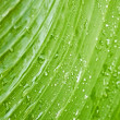 Large green leaf with rain drops — Stock Photo