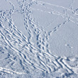 Dusted with snow footprints — Stock Photo
