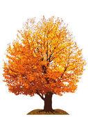 Autumn cherry tree illustration — Stock Photo