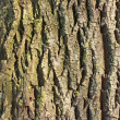 Detail of old tree bark — Stock Photo