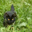 Stock Photo: Black cat in ambush outdoors