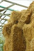 Bales of straw stacked in a heap — Stock Photo