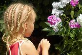 Little girl near the Hesperis plant — Stock Photo