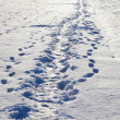 Stock Photo: Narrow footpath on snow