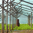 Wooden film greenhouse after harvest — Stock Photo