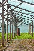 деревянные фильм парниковых после сбора урожая — Стоковое фото