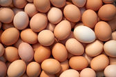 Heap of chicken eggs — Stock Photo