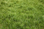 Meadow grass in the springtime — Stock Photo