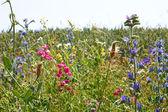 Snelle ontplooiing van verscheidenheid bonte wilde planten — Stockfoto