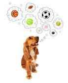 ładny pies z kulkami w myśl pęcherzyki — Zdjęcie stockowe