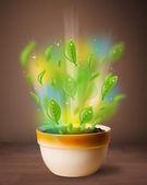 Gloeiende bladeren coming out van bloempot — Stockfoto
