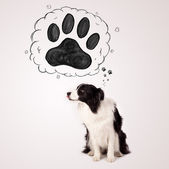 Cute border collie with paw above her head — Stock Photo