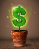 Dollar sign tree coming out of flowerpot — Stock Photo