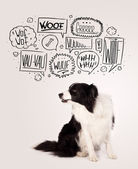 Sevimli köpek kabarcıklar kabuk ile — Stok fotoğraf