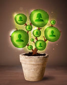 Social network tree coming out of flowerpot — Foto de Stock