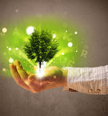 Glowing tree growing in the hand of a woman — Stock Photo