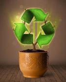 Recycle teken toenemende uit bloempot — Stockfoto
