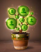 Sociaal netwerk boom coming out van bloempot — Stockfoto