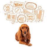Leuke hond met bubbels het ontschorsen — Stockfoto