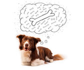 Border collie with thought bubble thinking about a bone — Stock Photo