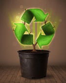 Recycle sign growing out of flowerpot — Stock Photo