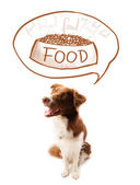Cute border collie dreaming about food — Stock Photo