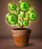 Social network tree coming out of flowerpot — Stock Photo