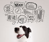 Söt hund med avbarkning bubblor — Stockfoto