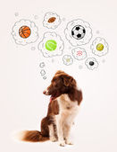 Cute dog with balls in thought bubbles — Stock Photo