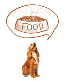 Cute cocker spaniel dreaming about food — Stock Photo