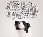 Roztomilý pes s štěkot bubliny — Stock fotografie