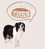 Söt border collie drömmer om mat — Stockfoto