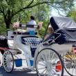 Central Park horse carriage - Stock Photo