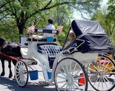 Central Park horse carriage — Stock Photo