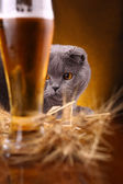 Cat and beer — Stock Photo