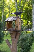 Dove in city park — Stock Photo