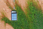 Overgrown building — Stock Photo
