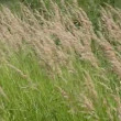 Stock Video: Grass in a field in the wind